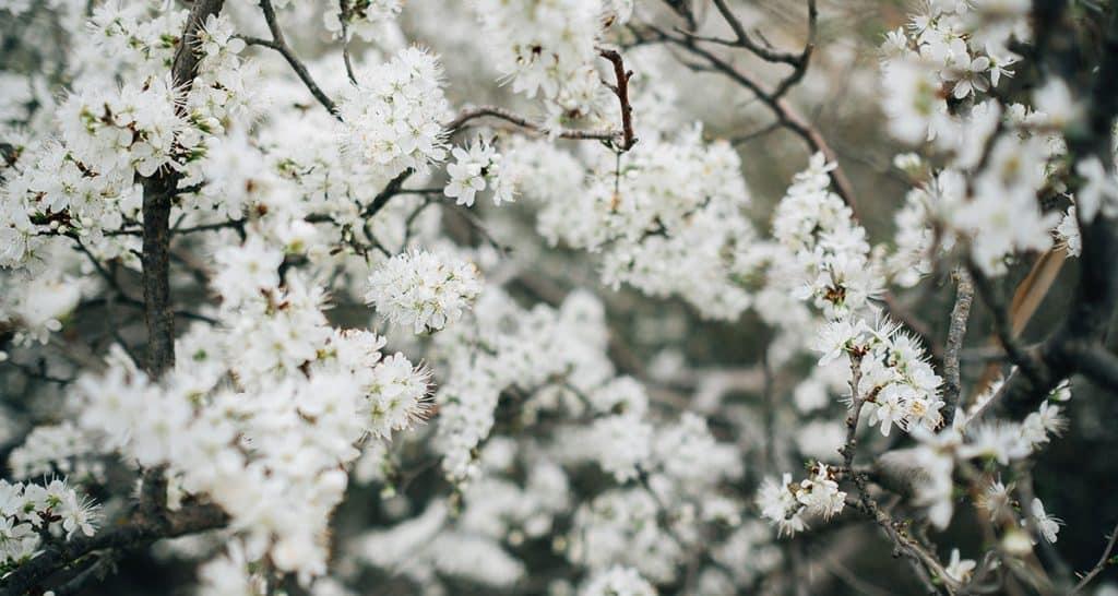 Profumi equivalenti di primavera